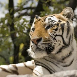 Excursión a Africam Safari Saliendo De Veracruz, Cardel y Xalapa